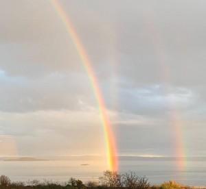 Alison Rainbow Crop B